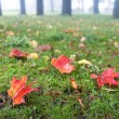 Wet red leaves on the grass — Photo