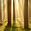 Morning sun in the forest — Stock Photo