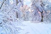 Beautiful winter — Stock Photo