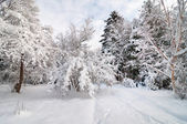 Parque de nieve — Foto de Stock