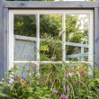 Garden flowers in the window — Stockfoto