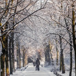 Winter time — Stock Photo #36790457