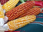 Corn over the table — Foto de Stock