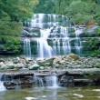 liffey falls — Stock Photo