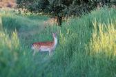 Eating deer — Stock Photo