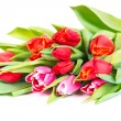 Tulips bouquet isolated on white — Stock Photo #27586145