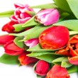 Stock Photo: Tulips bouquet isolated on white