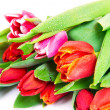 Tulips bouquet isolated on white — Stock Photo