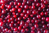 Red juicy cranberries background — Stock Photo