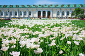 Alexandrovsky garden in Moscow, Russia — Stock Photo