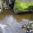 Mossy rocks in river — Stock Video #49805959