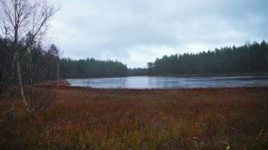 Herfst bos en rivier — Stockvideo