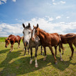 Gather of four horses on a farm — Stok fotoğraf
