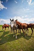 Gather of four horses on a farm — Stock Photo