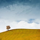 Lonely tree on the hillside against a cloudly sky — Stock Photo