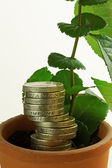 Seeds of Economic Growth — Stock Photo