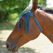 Thoroughbred Horse with Fly Mask Protector — Stock Photo