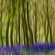 Woodland Background — Stockfoto