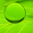 Droplet on leaf — Stock Photo
