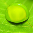 Droplet on green leaf — Stock Photo