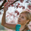 Young Blond Woman and Cherry Blossoms - Stock Photo