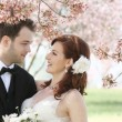 Wedding Couple Under Cherry Blossoms - Stock Photo