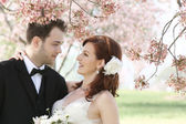 Wedding Couple Under Cherry Blossoms — Stock Photo
