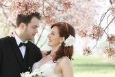 Wedding Couple Under Cherry Blossoms — Stock Photo
