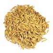 Organic oat grains - Stock Photo