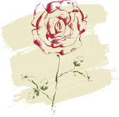Hand drawn rose — Stock Vector