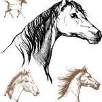 Horses — Stock Vector #28552411