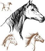 лошади — Cтоковый вектор