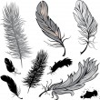 Stock Vector: Set of feathers