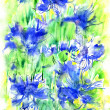 Watercolor corn-flowers — Stock Photo