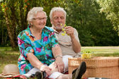 Senior couple picknicking in the park — Stock Photo