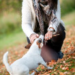 Playing with my terrier — Stock fotografie
