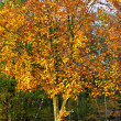 Autumn tree colors — Stock Photo