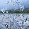 Winter landscape white flower - Stock Photo