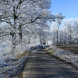 Winter landscape an icy road — Stock Photo