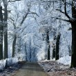 Winter landscape forest road with ice trees — Stock Photo #12741324