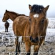 Winter landscape three horses in the snow — Stock Photo