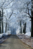 Winter landscape forest road with ice trees — Stock Photo