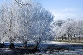 Winter landschaft bäume auf einem maedow — Stockfoto
