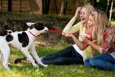 El perro está ganando — Foto de Stock