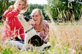 Playing with the dog in the sun — Stock Photo