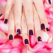 Woman with beautiful nails holding petals — Stock Photo