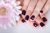 Beautiful manicured nails — Stock Photo