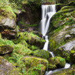 Triberg Waterfalls — Stock Photo #22357969