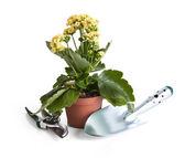 макро горшечные растения и садовые инструменты — Стоковое фото