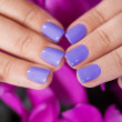 Manicured Fingernails In Front Of Purple Flowers — Stock Photo